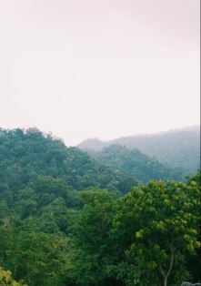 The jungles of Siraha